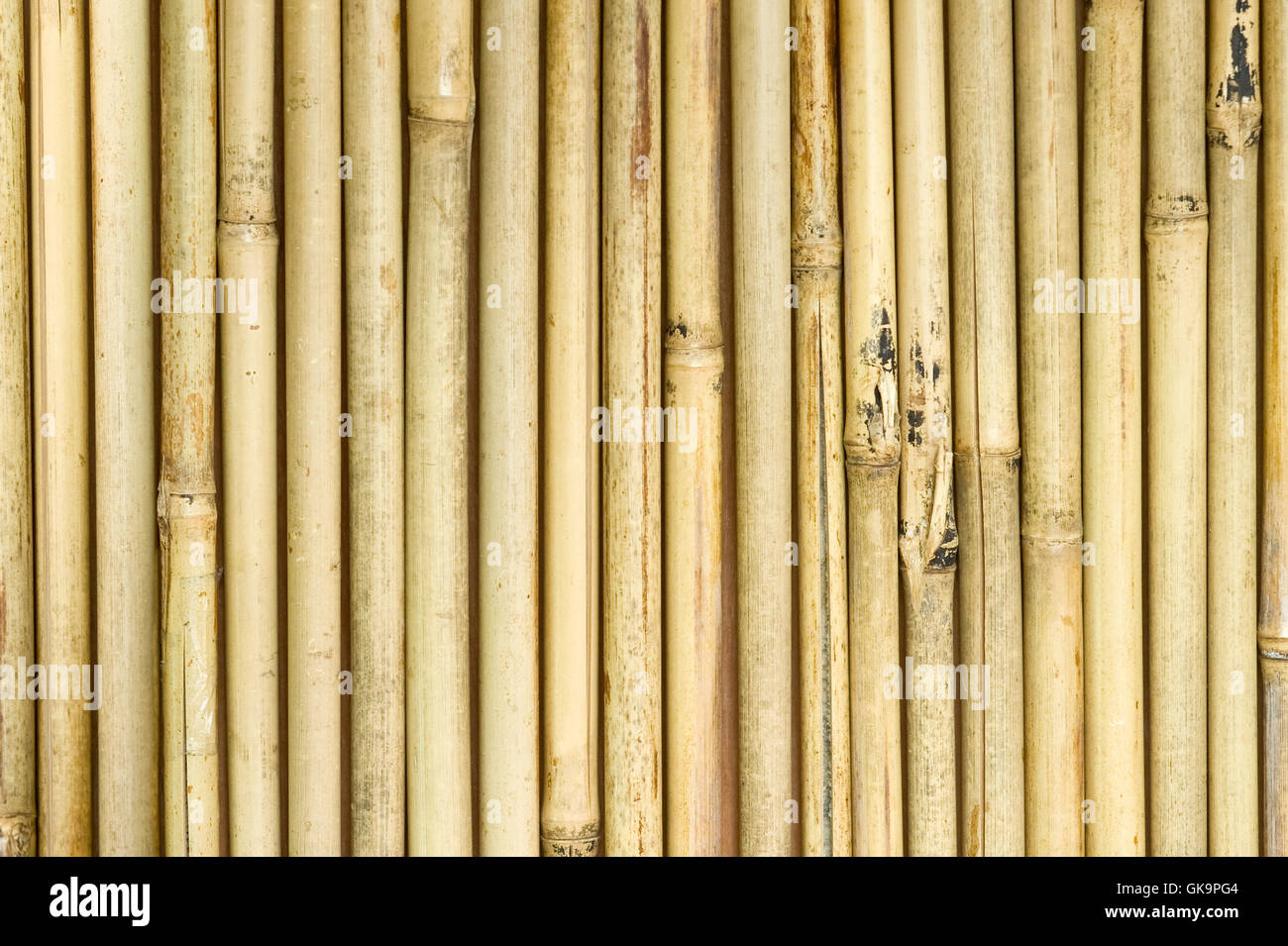 curtain bamboo asian - Stock Image