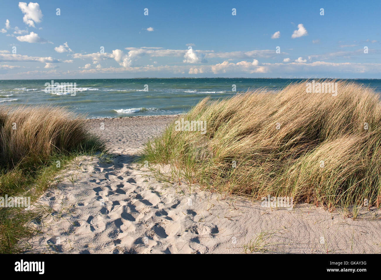way to the beach by dunes on the baltic sea in heiligenhafen - Stock Image