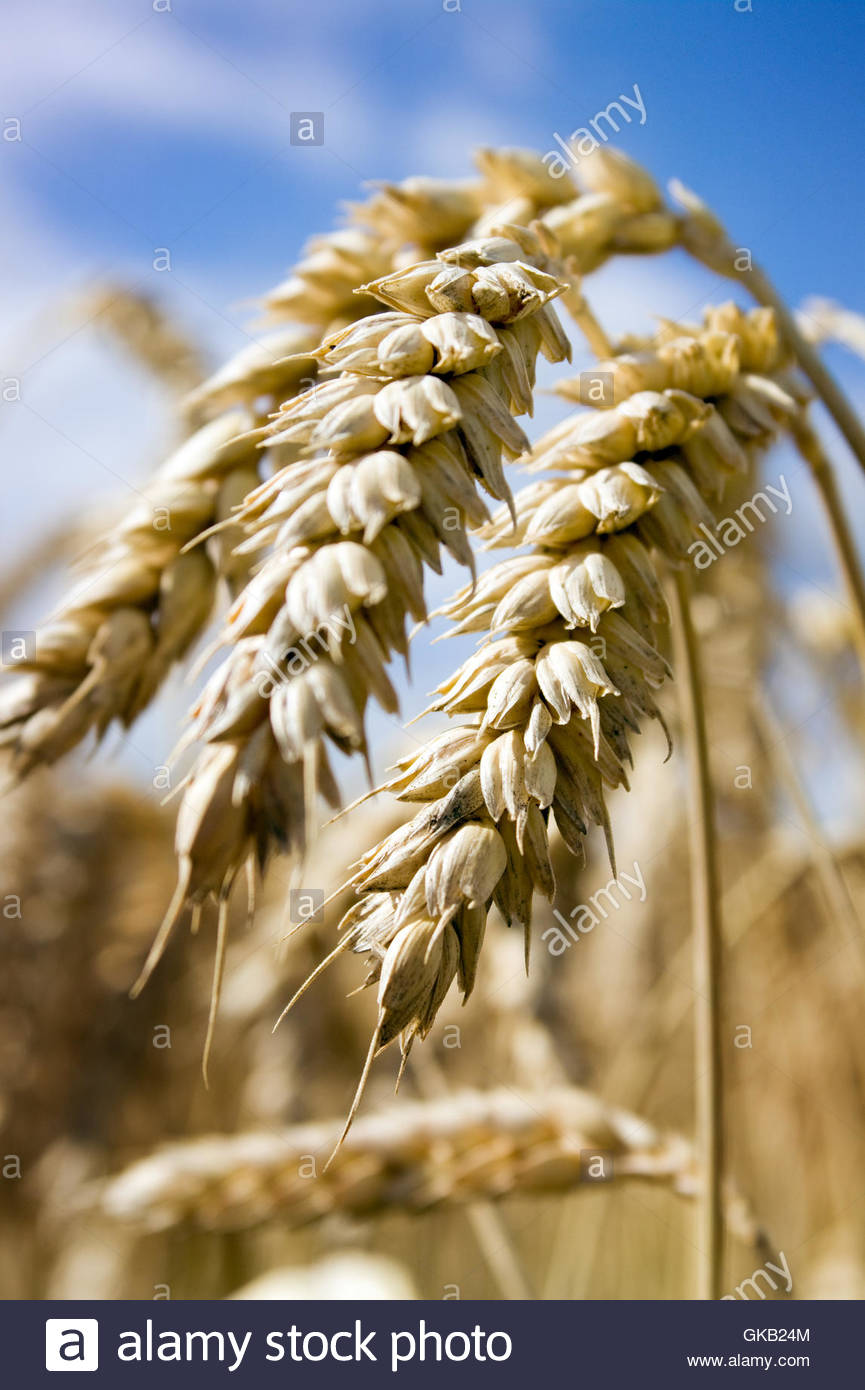our daily bread . - Stock Image