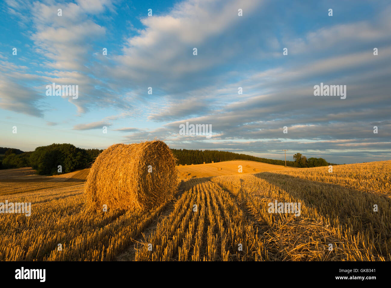 field summer summerly - Stock Image