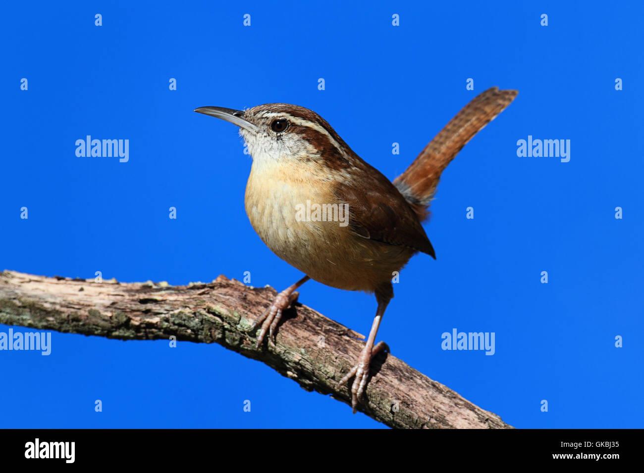 winter bird birds - Stock Image