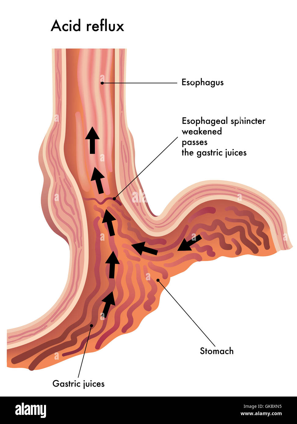 diseases of the oral mucosa and the lips 1e