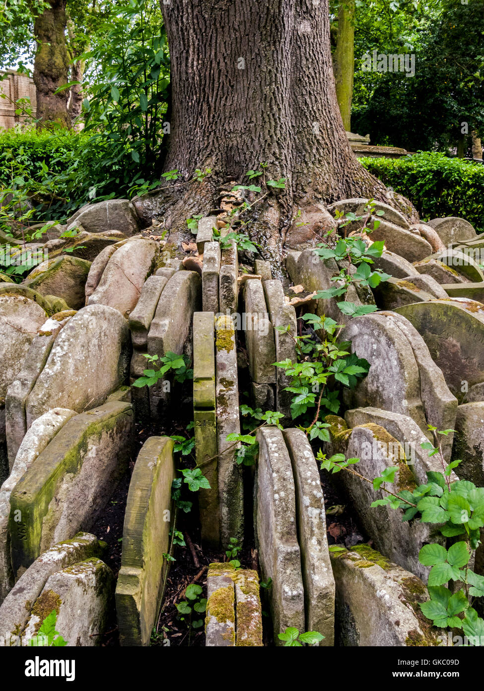 The Hardy Tree, St Pancras Old Church, London - Stock Image