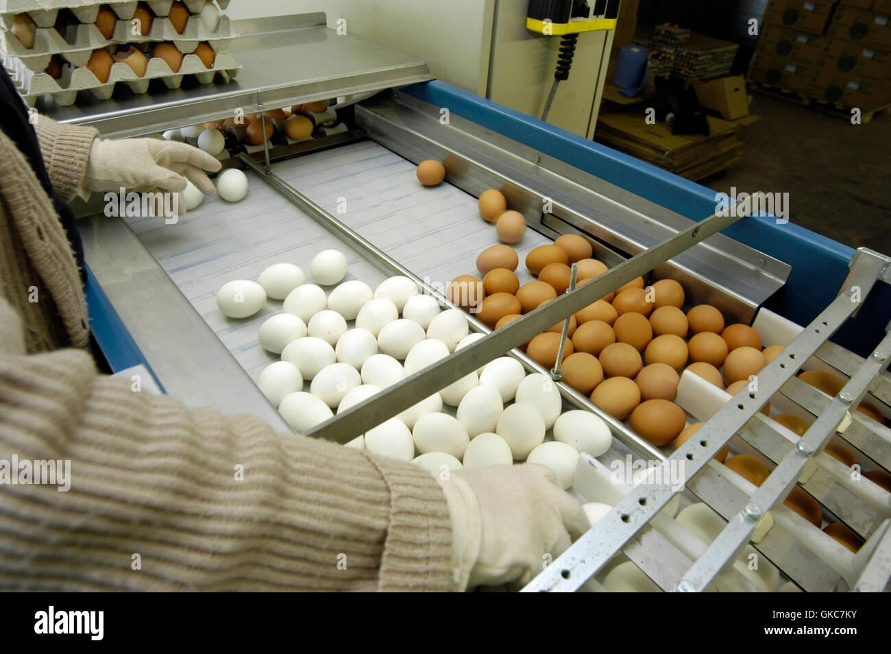 eier,nahrungsmittelindustrie,nahrungsmittel,ernahrung,ernaehrung,nahrung,essen,industrie,wirtschaft - Stock Image