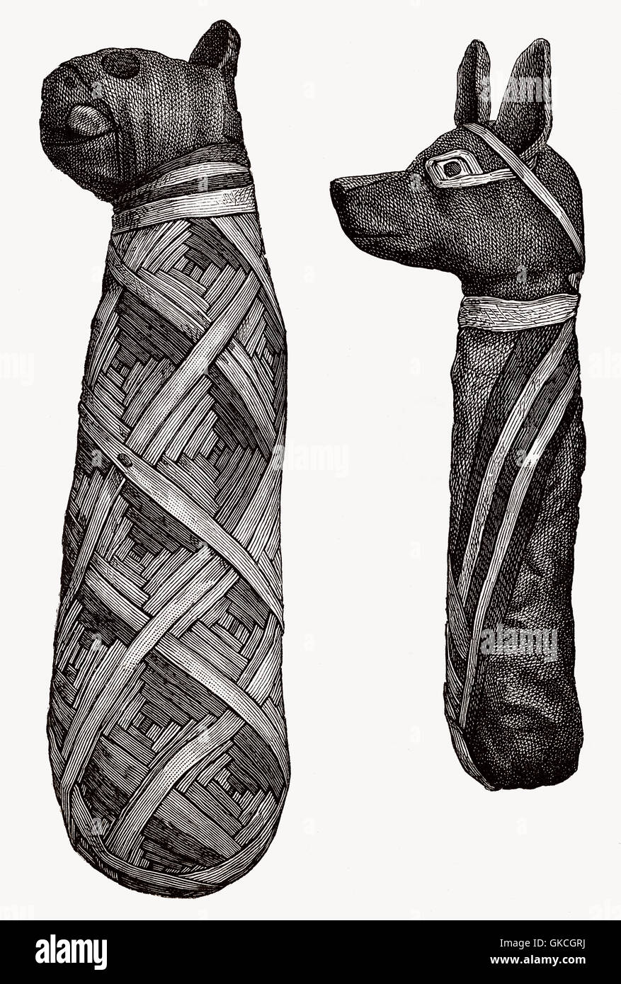 Mummies of animals, ancient Egypt, illustration from the 19th century - Stock Image