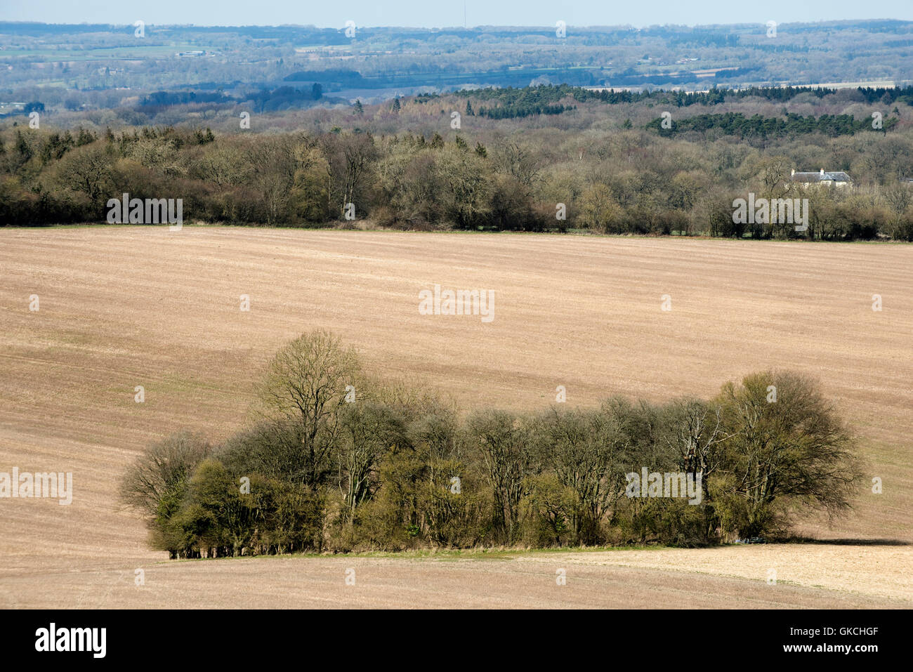 A circular copse of trees with slight green tinge of fresh spring growth in the centre of a fallow field, March Stock Photo