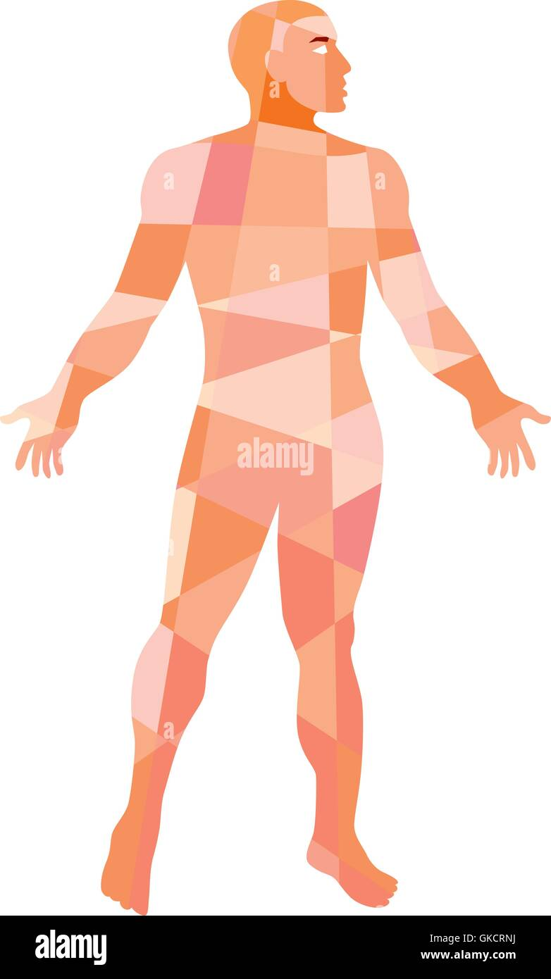 Gross Anatomy Male Isolated Low Polygon - Stock Image
