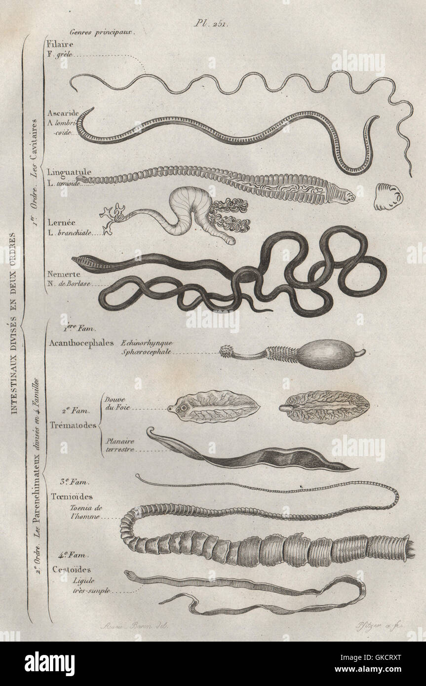 Intestinal Parasites >> Intestinal Parasites Intestinaux Intestinal 12 Orders