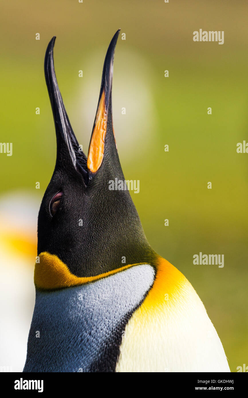 animal bird birds - Stock Image