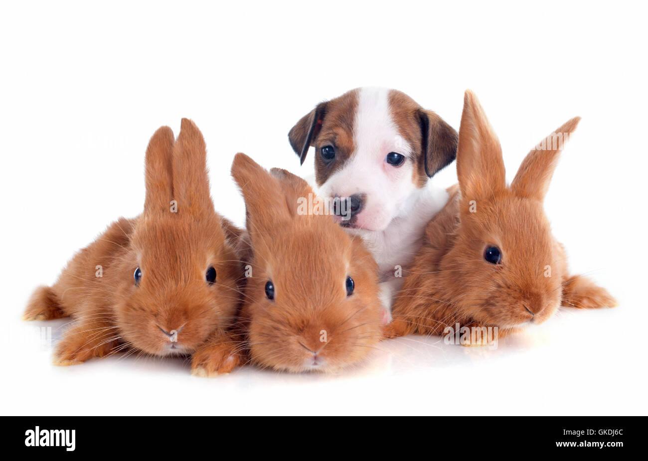 dog rabbit three - Stock Image