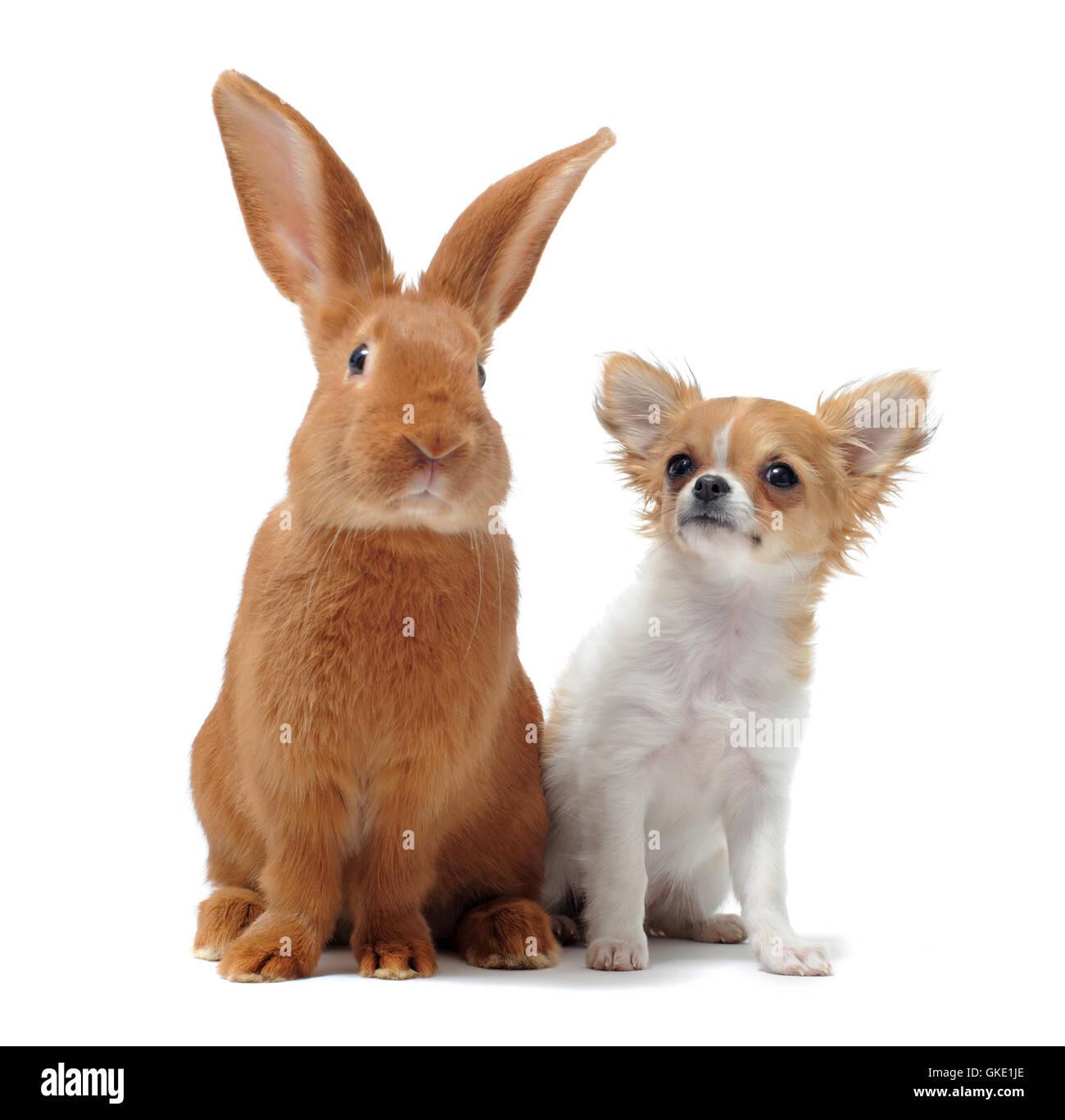 dog rabbit puppy - Stock Image