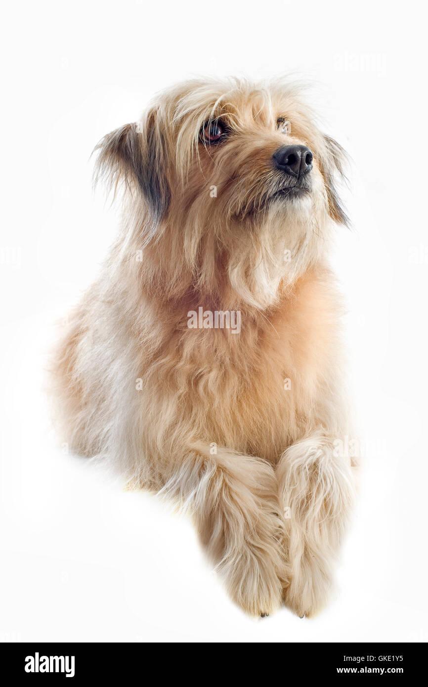 animal pet dog - Stock Image