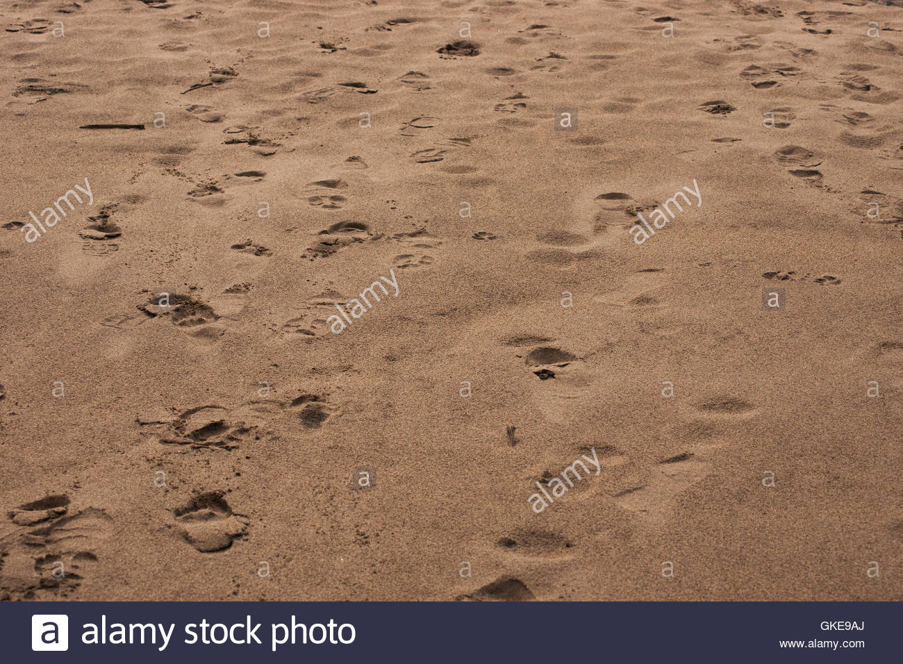 Trails, footprints and animal tracks on the Monkey Island's beach. Madre de Dios river sand, Puerto Maldonado, Peru. - Stock Image