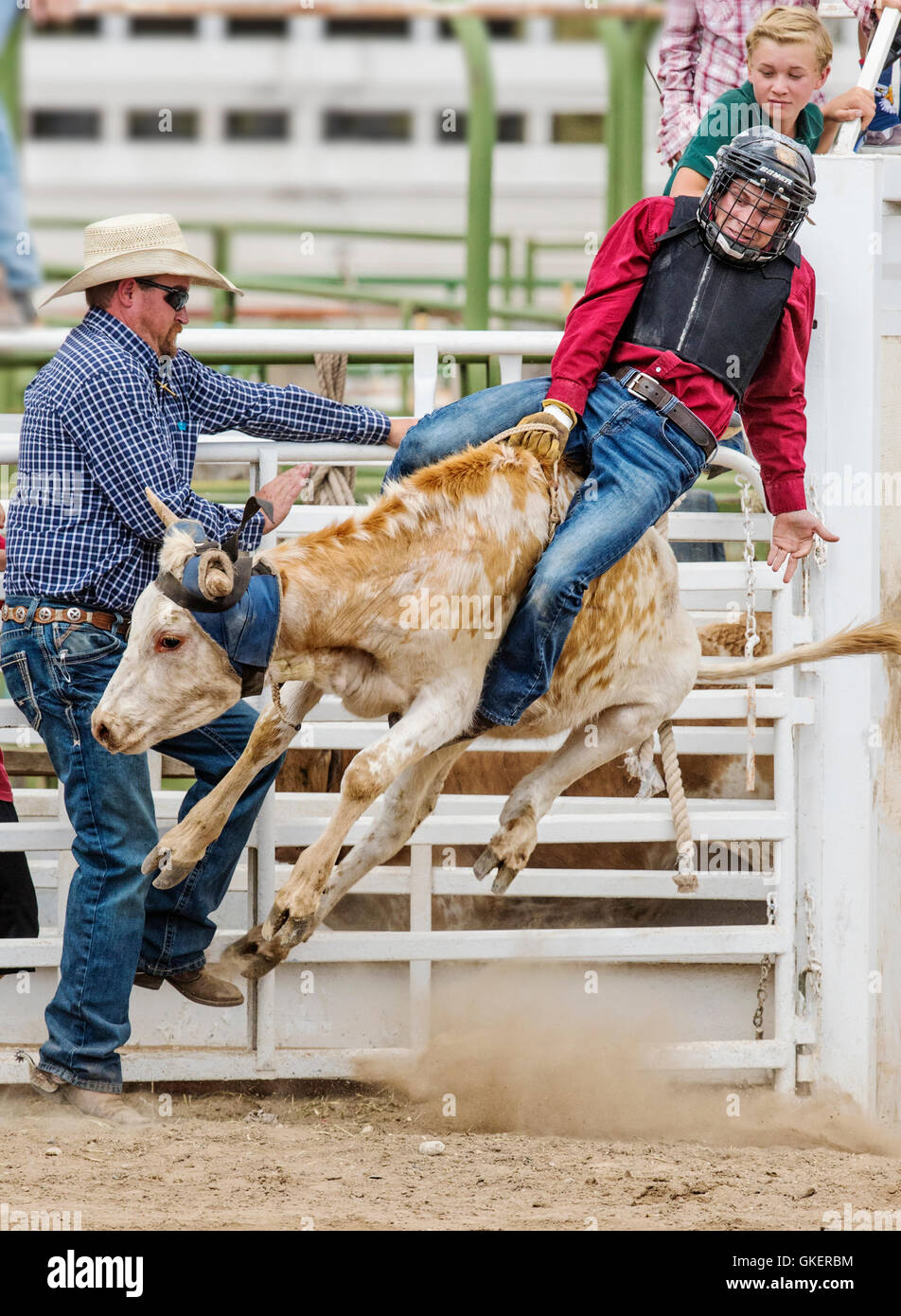 Young cowboy riding a small bull in the Junior Steer Riding competition, Chaffee County Fair & Rodeo, Salida, - Stock Image
