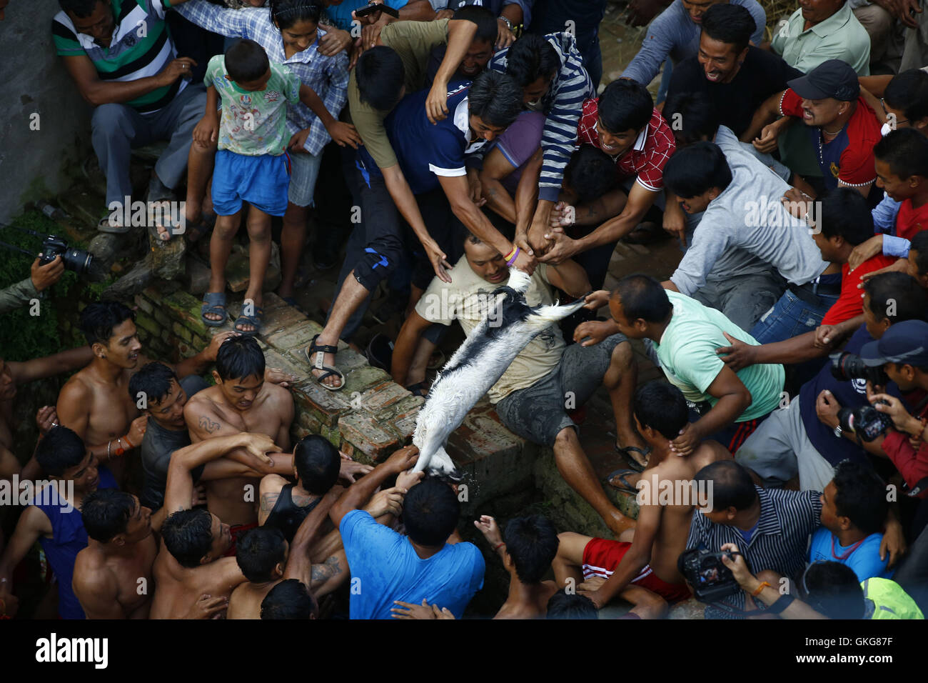 Lalitpur, Nepal. 20th Aug, 2016. Nepalese revellers compete to retrieve a goat at sacred Deu pond during Deopokhari - Stock Image