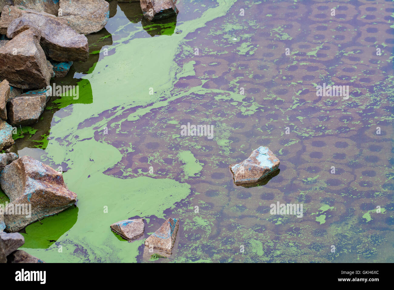 Blue Green Algae on the margins of a reservoir - Stock Image