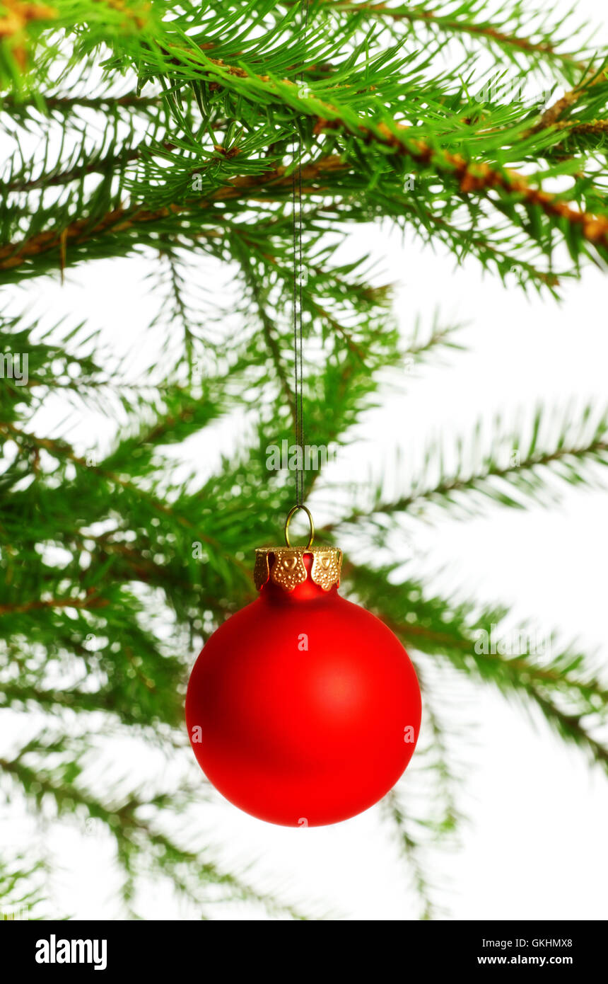 red decoration ball on spruce branch - Stock Image