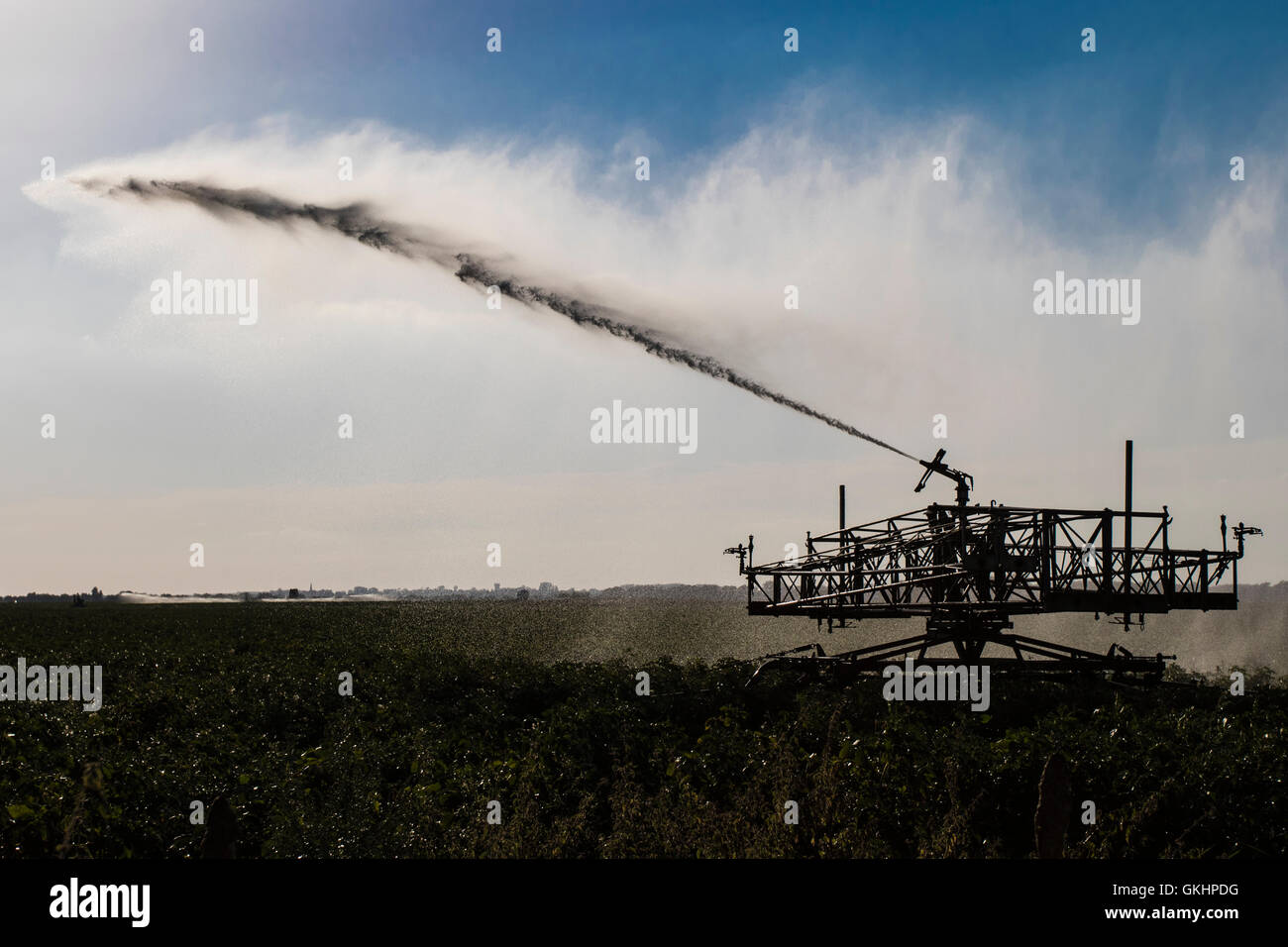 Irrigation of crops during hot weather, Cambridgeshire, England - Stock Image