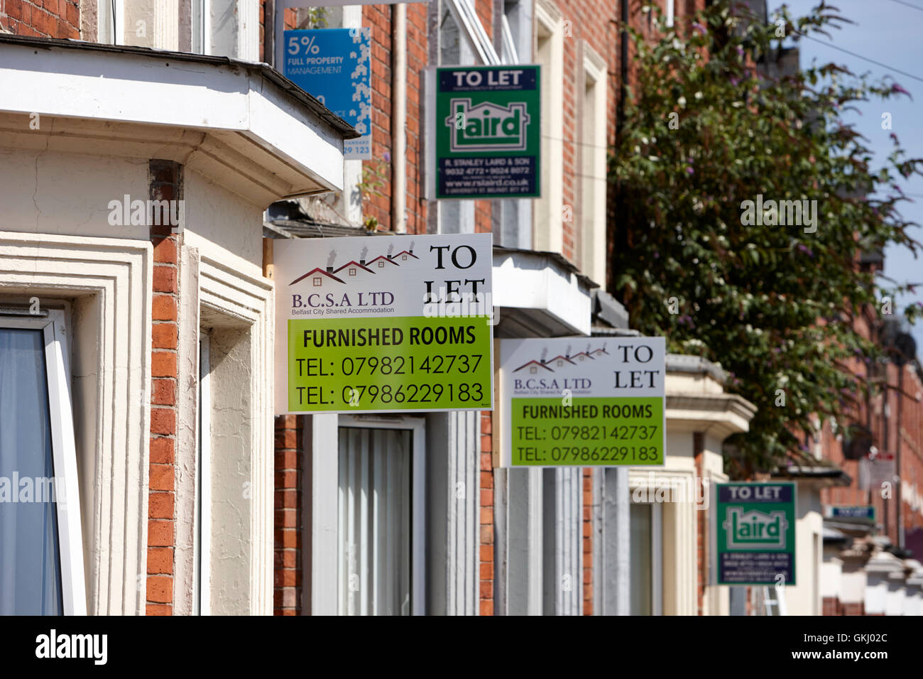 to let signs outside properties in the holylands university area of belfast - Stock Image