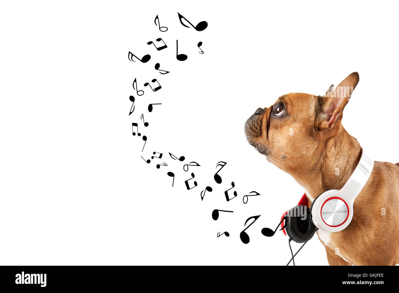 dog listens to music - Stock Image