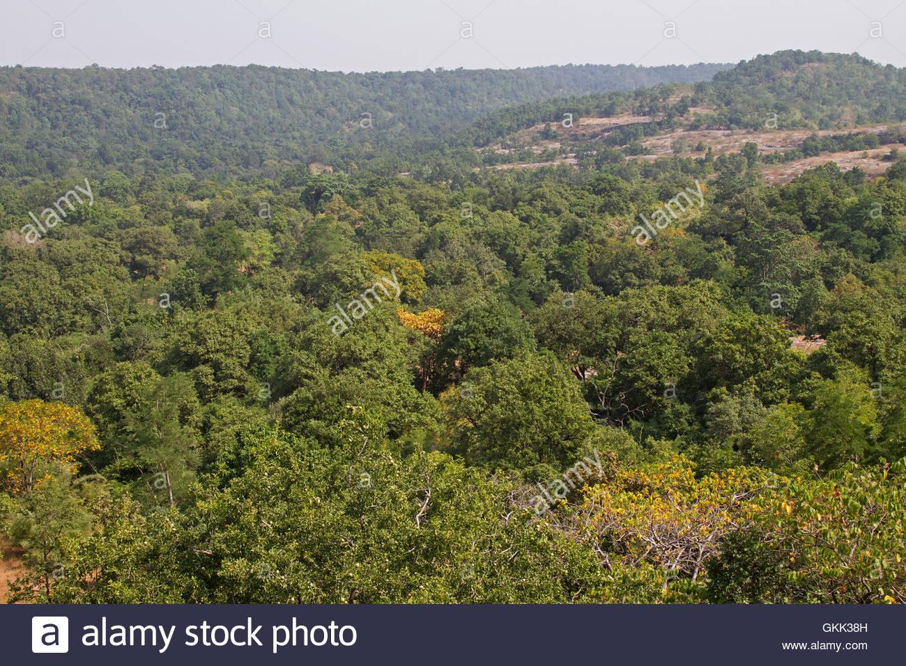 Bandhavgarh National Park, India, jungle scene, forest scene, tiger reserve, bengal tigers - Stock Image