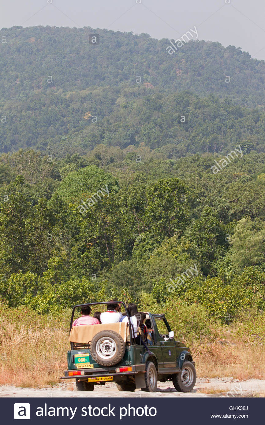 tourists travel by jeep in Bandhavgarh National Park, India, tigers, tiger reserve - Stock Image