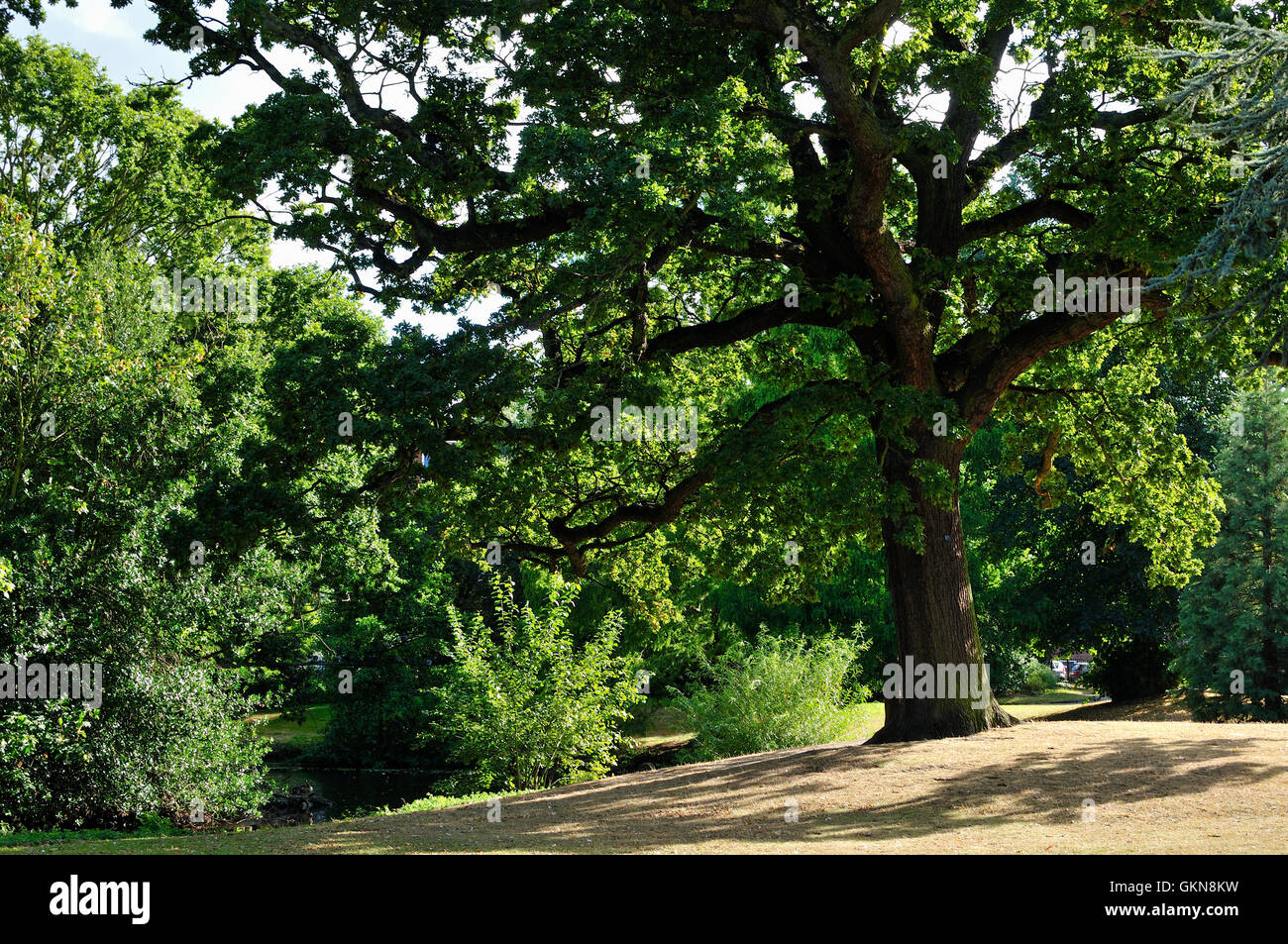 Springfield Park, Hackney, London, in summertime - Stock Image