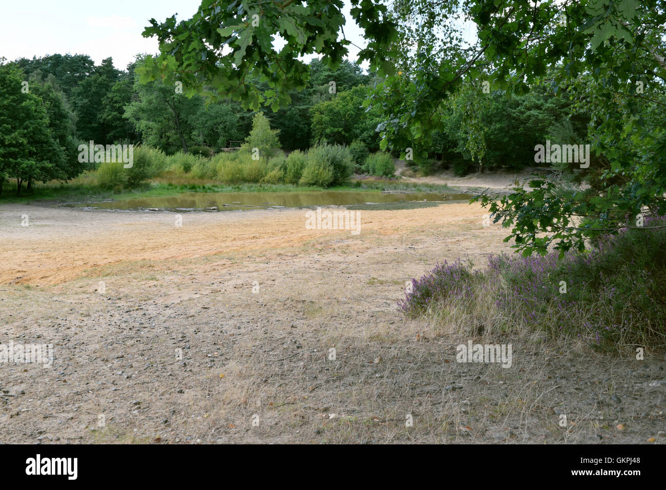 The sandy beach at Horsell Common, Surrey, near woking, in the summer. - Stock Image