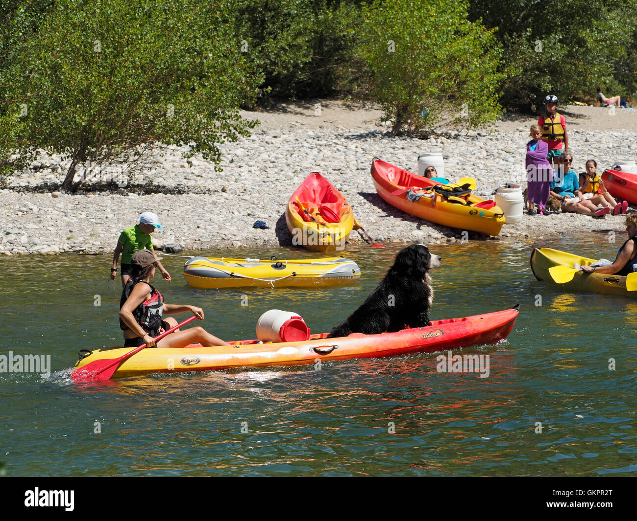 Even dogs go on a canoe trip in France, this is the Herault river in the Cevennes region. - Stock Image