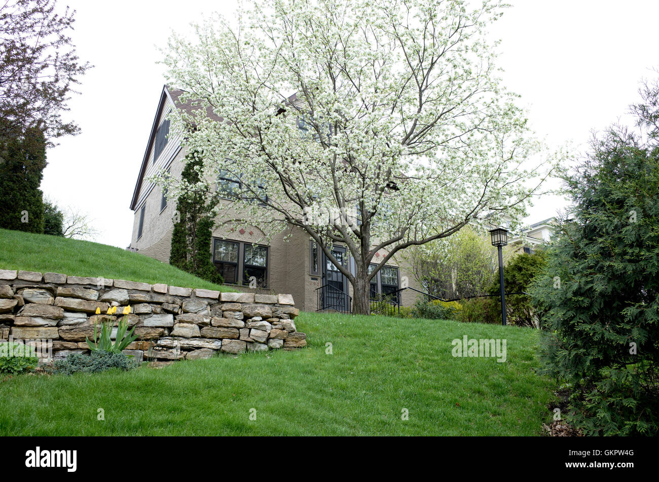 Landscaped yard of home with a blossoming fruit tree in front. St Paul Minnesota MN USA - Stock Image