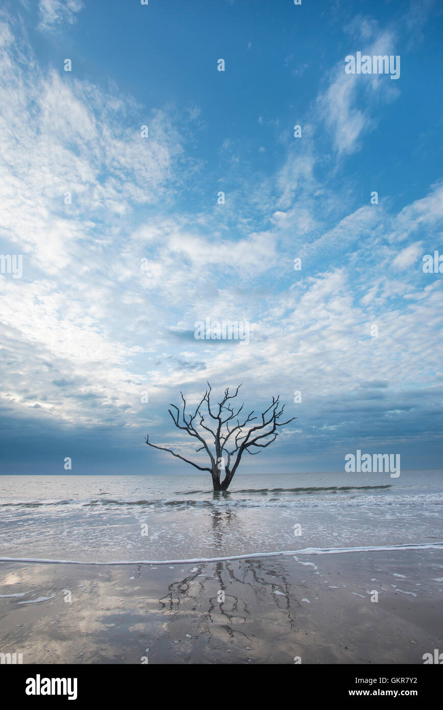 Sunrise, dead tree in shallows of Atlantic Ocean, Bone yard, Edisto Island, Botany Bay, South Carolina USA - Stock Image