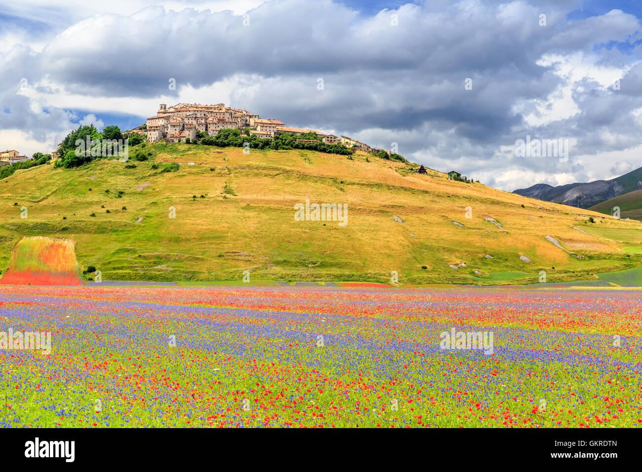 Field of wildflowers, Castelluccio di Norcia, Piano Grande, Monti Sibillini National Park, Umbria, Italy - Stock Image