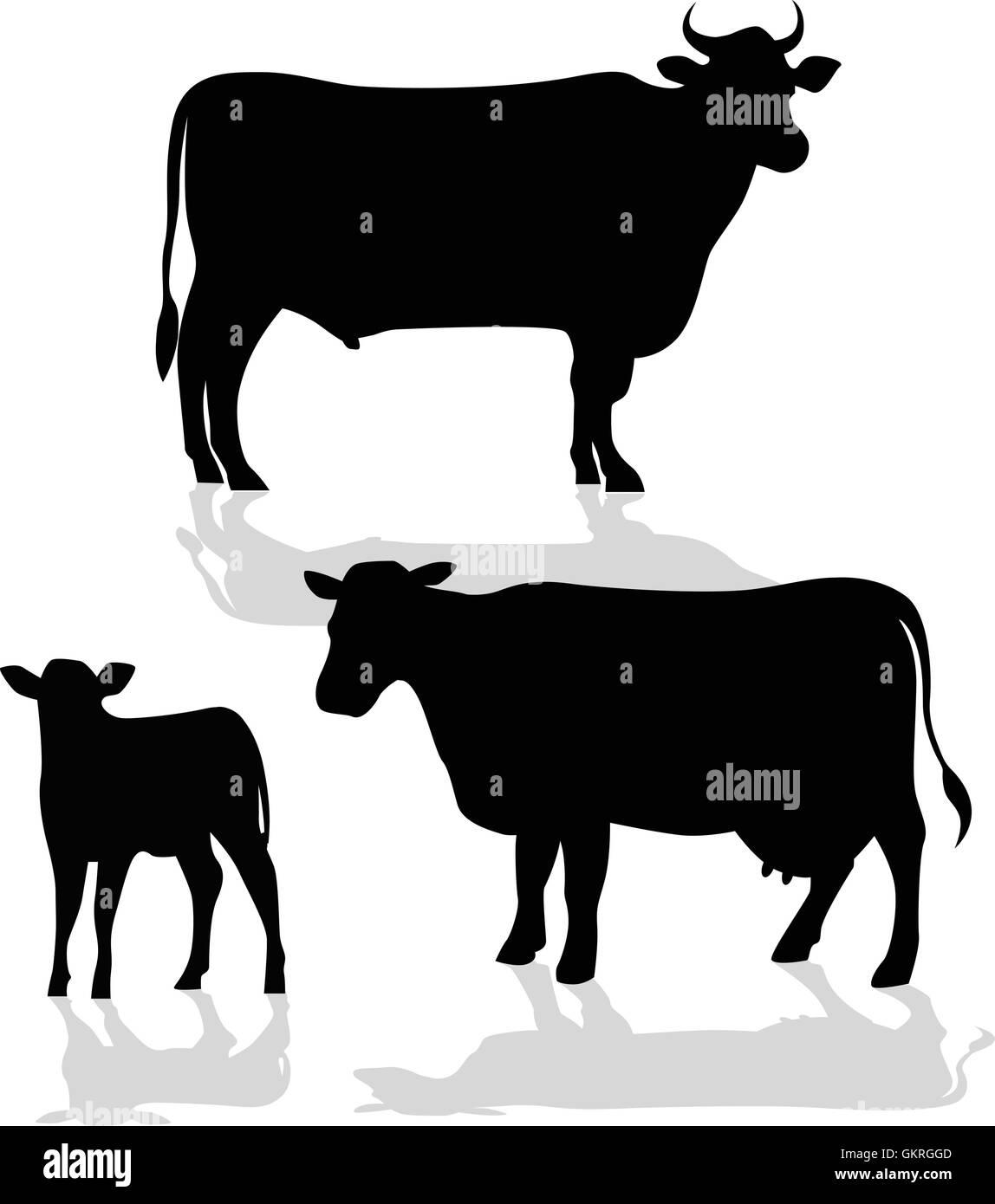 animal bull black swarthy jetblack deep black cow cattle farm animal calf  food aliment animal -