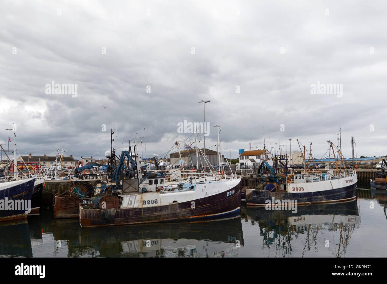 portavogie fishing fleet in harbour under stormy grey skies - Stock Image
