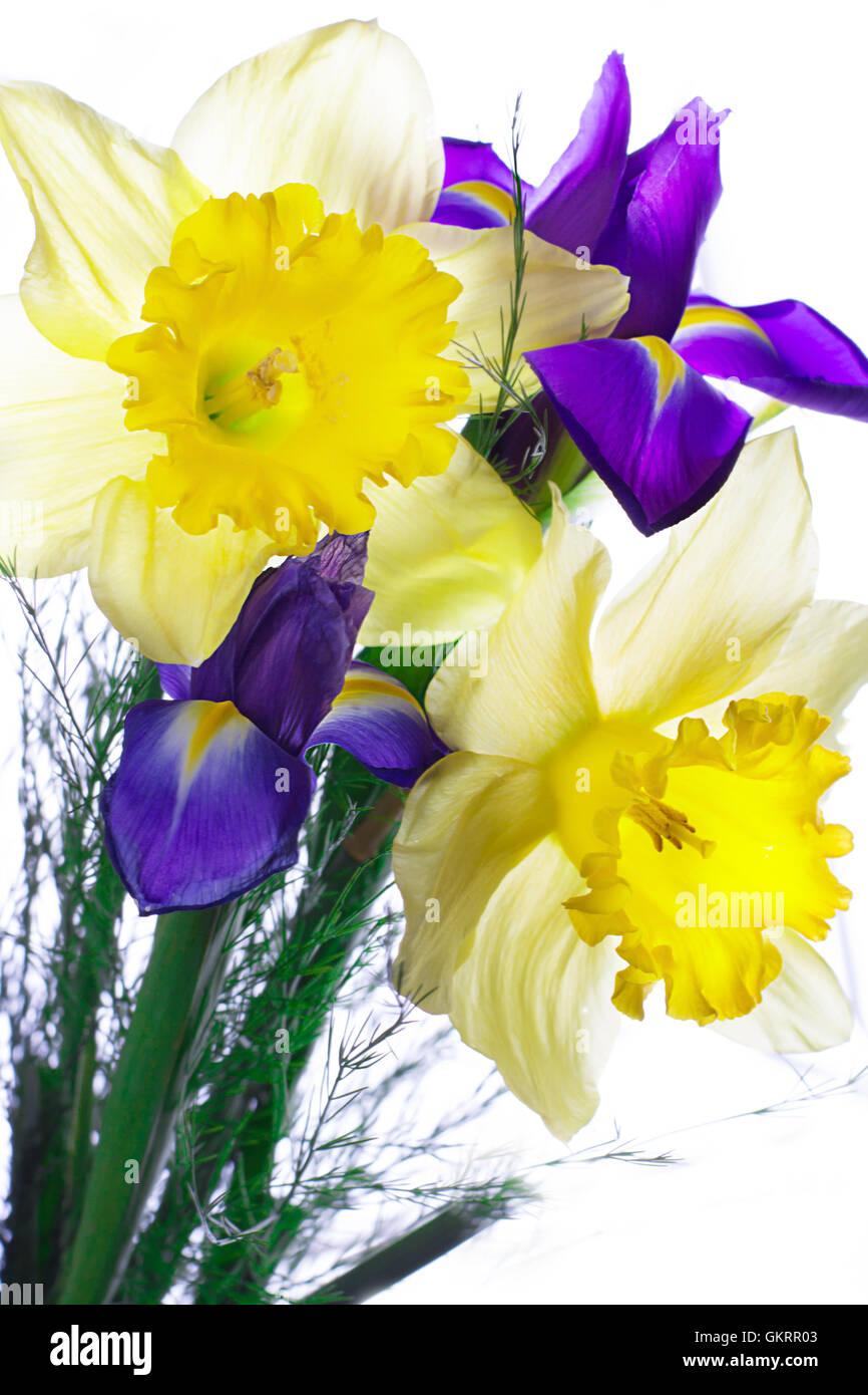 Daffodil iris flower stock photos daffodil iris flower stock bouquet of narcissus and iris stock image izmirmasajfo