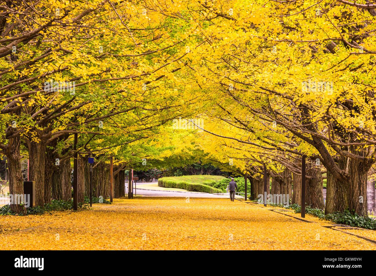 Tokyo, Japan autumn park. - Stock Image