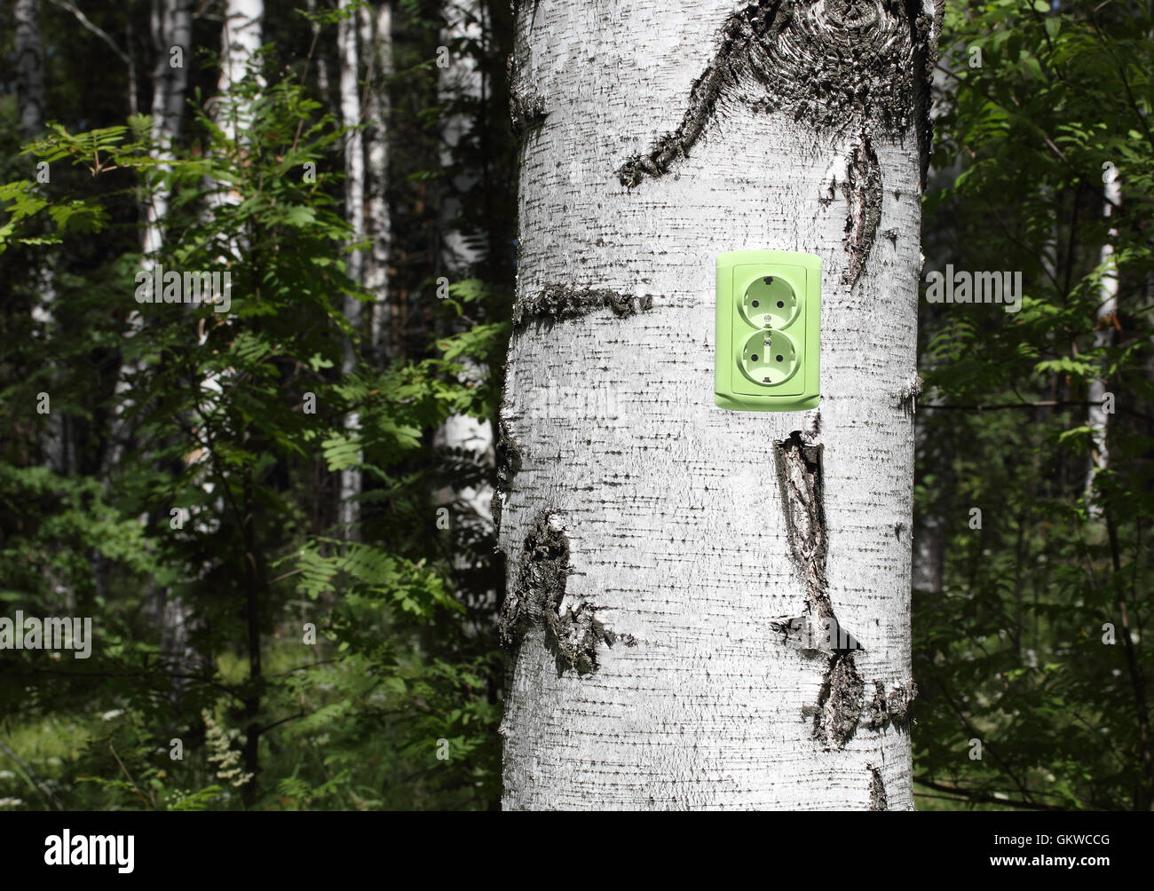 power receptacle on a tree - Stock Image