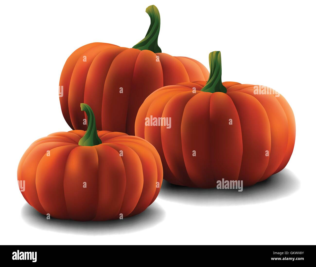 Set of Pumpkins isolated on a plain background. - Stock Vector