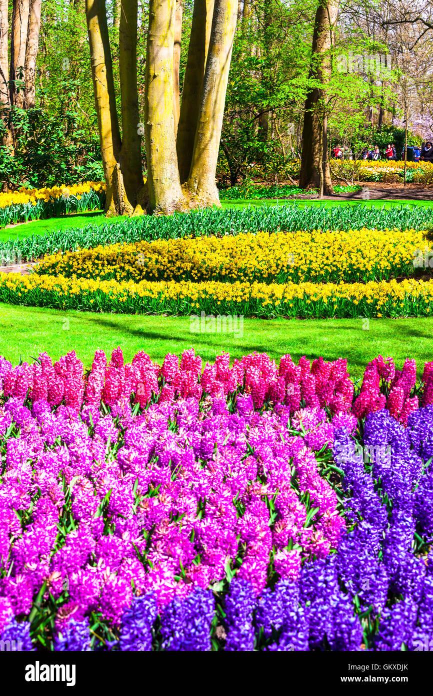 beautiful famous Keukenhof floral park in Holland - Stock Image
