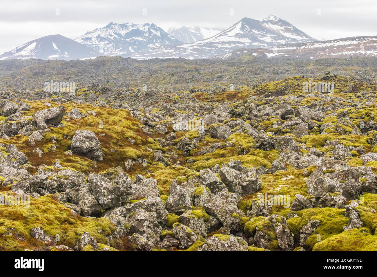 The Berserkjahraun is a 3 to 4,000 year old rocky and mossy lava field in the Snaefellsnes peninsula, western Iceland. - Stock Image