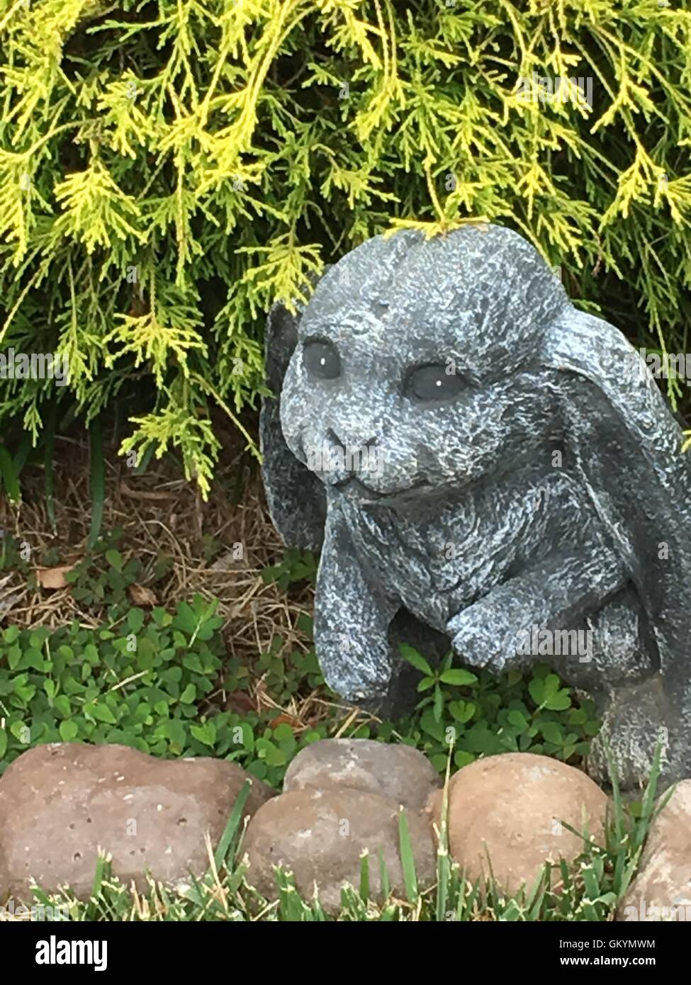Stone Rabbit in front of Gold Mop cypress - Stock Image