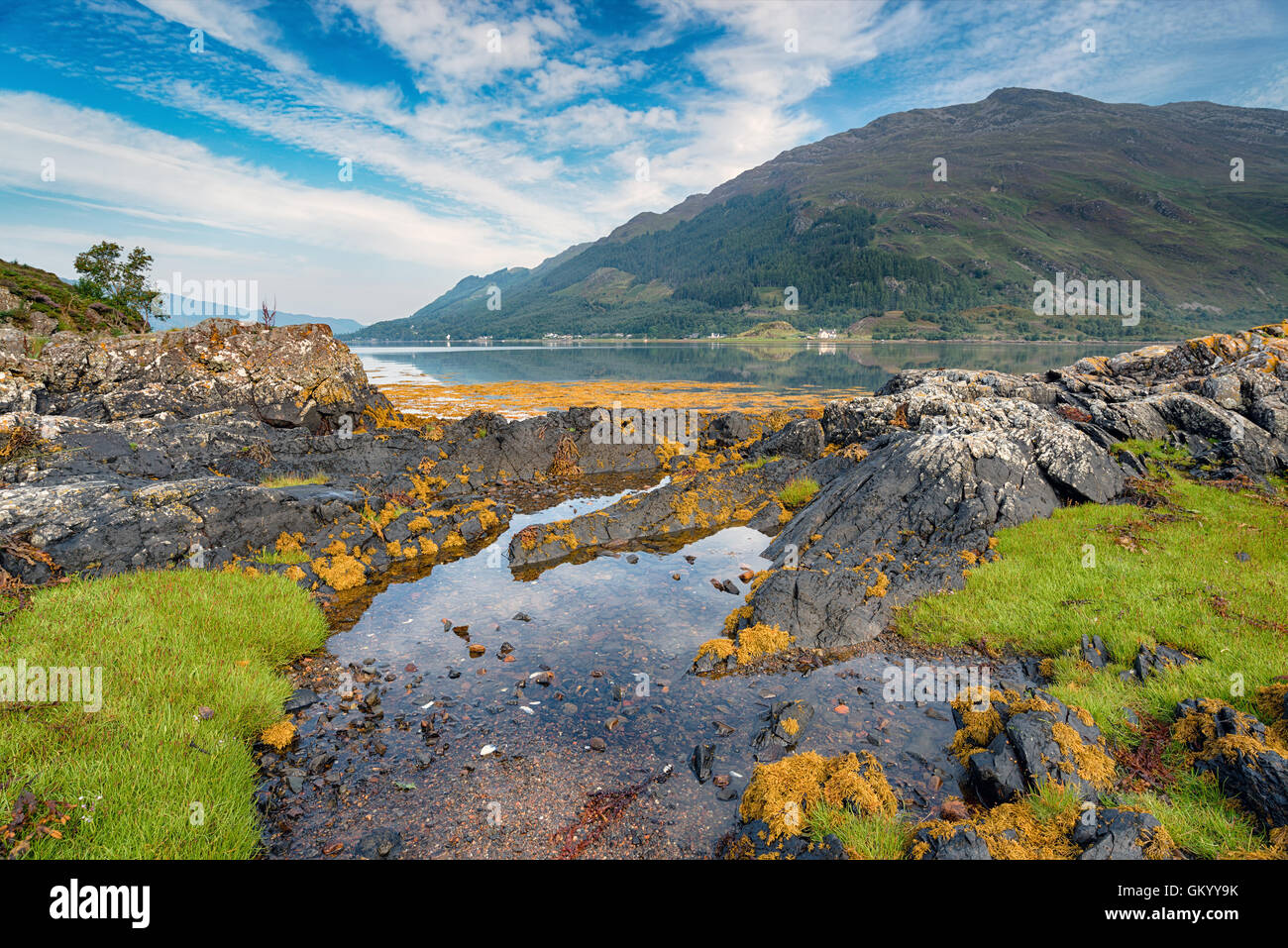 The shores of Loch Duich with bright green grassy samphire and weathered rocks - Stock Image