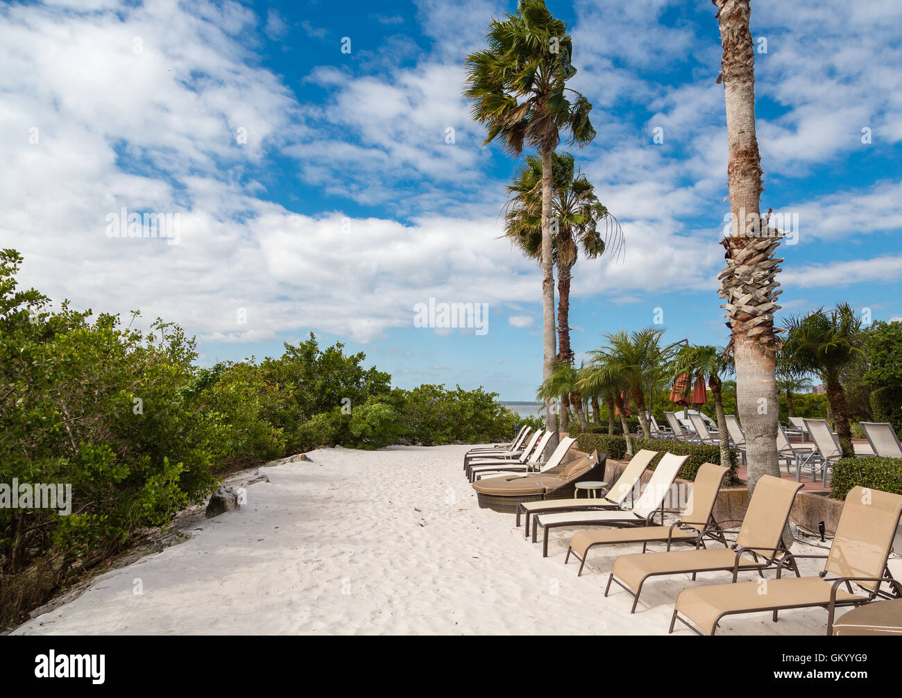 Chaise lounges on a sandy beach under palm trees - Stock Image