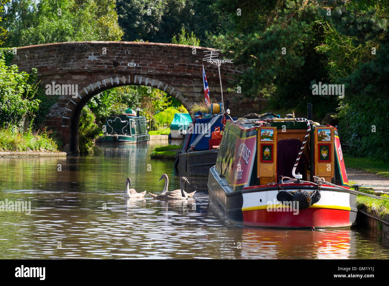Swans and narrowboats on the Shropshire Union Canal at Talbot Wharf, Market Drayton, Shropshire, England, UK - Stock Image