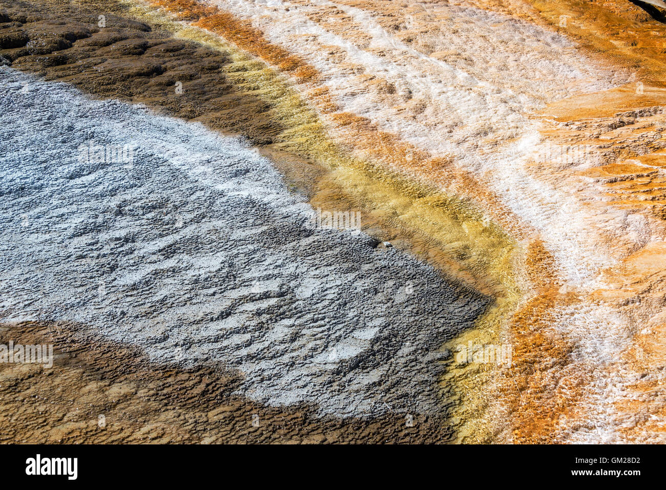 Bacteria mat in Mammoth Hot Springs in Yellowstone National Park - Stock Image