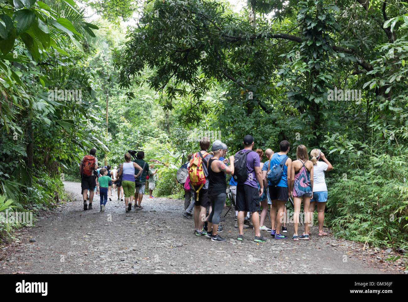 Tourist groups in Manuel Antonio national Park, Costa Rica, Central America Stock Photo
