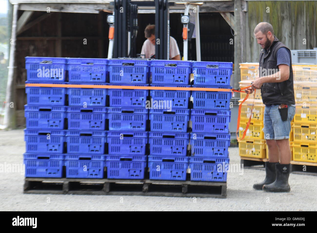 Crates stacked up being secured at the winery of Neudorf Vineyards, Nelson, New Zealand - Stock Image
