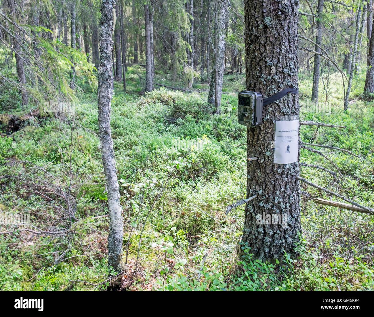 Wildlife surveillance camera, Sweden Stock Photo