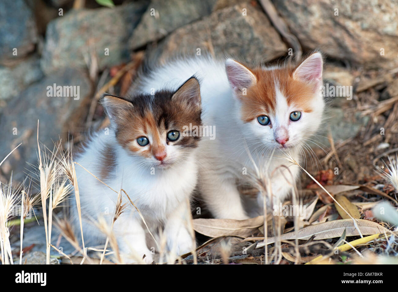 Two kittens sitting outdoors side by side and looking at camera - Stock Image