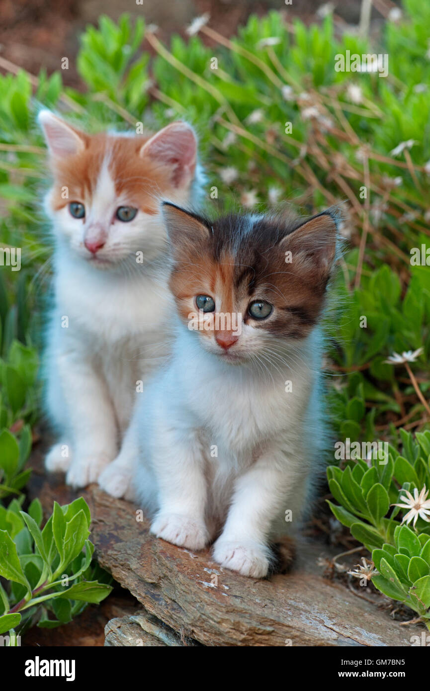 Two kittens sitting on a wall in the garden - Stock Image